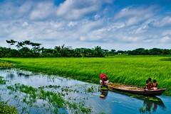 Bangladesh... (roksbox (Rokon)) Tags: blue sky green nature water landscape boat village lily bangladesh bangladeshi d60 narayangonj barodi