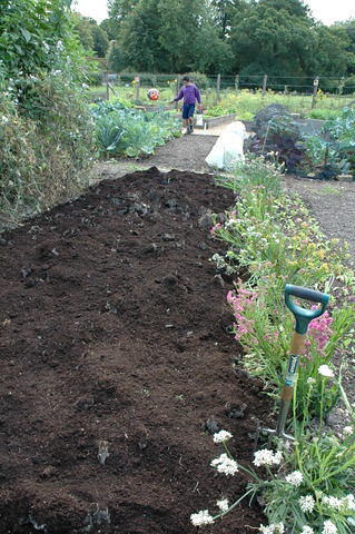 Top dressing beds with compost