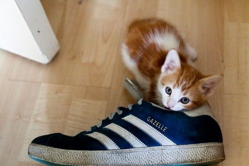 cute orange kitten playing with shoe cat pic