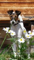 Vanda tra i fiori (barmiki) Tags: fiatlux