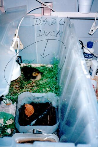 Dad's Duck