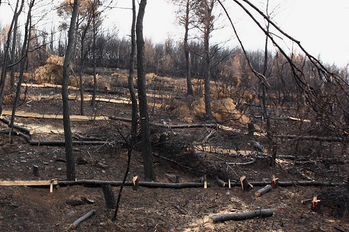 Burnt field at Stamata