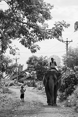 Elephant and Friends (sparkeypants) Tags: travel nepal friends blackandwhite bw favorite white elephant black girl canon walking geotagged nationalpark kid asia track village child traffic path nepalese favourite chitwan royalchitwannationalpark earthasia lpbandw lpriding lp2011winners