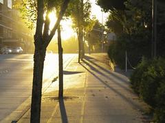 DSCN0317 - light (webber0075) Tags: city trees usa evening walk wa s230 bellevue goldenlight