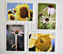 setof4cards