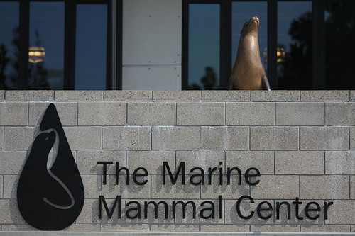 Marine Mammal Center welcome