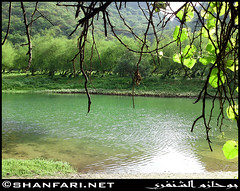 Darbat Lake, Dhofar (Shanfari.net) Tags: flowers plants nature al natural ericsson sony greenery cave oman salalah  sultanate dhofar  khareef  haq      taqah    governate  madeinat   darbat taiq c905 maghsail  raythut