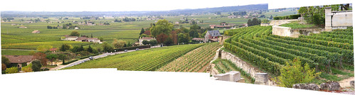 Saint Emilion Vineyard Panorama