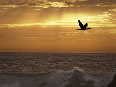 Escape of the cormorant (Ian@NZFlickr) Tags: sea bird birds creek sunrise bravo pacific harbour wave australia montage nsw cormorant coffs boambee flickrsbest abigfave magicunicornverybest magicunicornmasterpiece