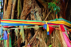 Save the Tree (Jeevana Yahoo) Tags: tree nature colors thailand ribbond