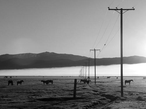 Telephone Poles 01 BW