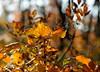 Controluce sul Carso goriziano (paolo-55) Tags: nikon autunno carso d300 sommaco scotano 105mmvrmicronikkor theunforgettablepictures carsogoriziano alberodellanebbia