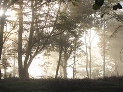 Planchez en Morvan, France. (Jeroen Hensen) Tags: wood trees fog landscape day picturesque morvan canonnl planchez jeroenhensen
