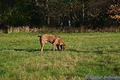 _EF10090 (CaneAmi) Tags: yule zarah nov09 huntermaja