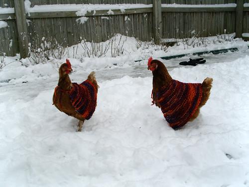 66daea661 Chicken Sweaters