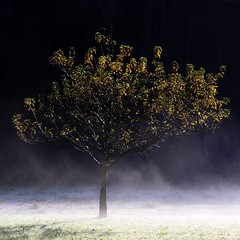 Rsistance (skubmic) Tags: autumn winter white mist black cold tree ice leaves dedication frost enz b10 strohgu roswag skubmic brechtiimages