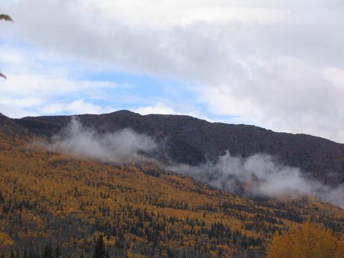 Fall colours in Yukon