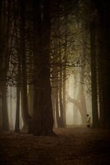 Foggy morning (Sintra) (Elsa M. Gomes) Tags: trees winter color fog landscape sintra textures figure canon5d lonely thegoldenratio memoriesbook thesecretlifeoftrees artistictreasurechest elsamotagomes