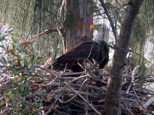 Eagle 20091206