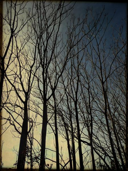 be tree, just tree