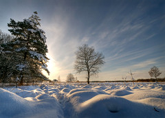 Wintertime (Dani℮l) Tags: christmas winter snow holland ice netherlands landscape bravo daniel sneeuw nederland hdr friesland heide winterwonderland kerstmis landschap d300 wijnjewoude december2009