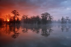 Swamp Star (Ben Pierce Photography) Tags: morning trees sun lake reflection water fog clouds canon rising la louisiana bravo lafayette ben willow swamp valentines pierce sunburst cypress depth wetland tupelo acadiana lakemartin breauxbridge idream impressedbeauty cypressislandpreserve