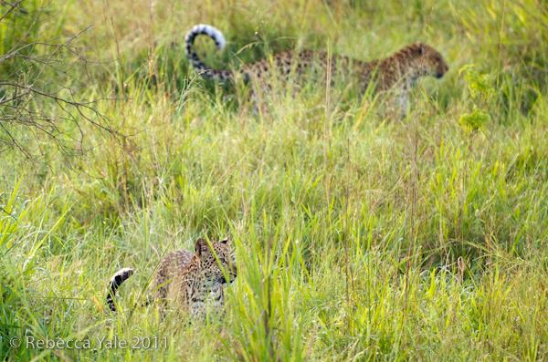 RYALE_Rwanda_Uganda_Safari-299