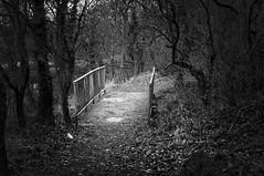 Little bridge in a little wood BW (Grifos) Tags: ©leehouston bw blackandwhite blackwhite nikon nature nlw newtoninmakerfield newtonlewillows england grifos d300