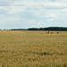 Têtes dans les champs