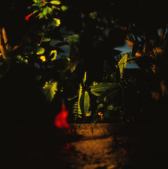 red in green (akira ASKR) Tags: longexposure bronica okinawa naha 2009 velvia100f bronicas2  rvpf zenzabronica zenzabronicas2 akiraaskr