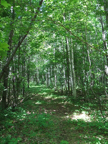Hiking Trail, Oneida County Forest