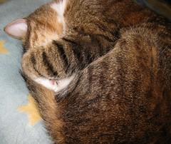 Leave me alone! (jerushy44) Tags: cat twinkle
