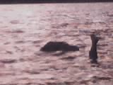 Hey, what's the lochness monster doing in Ireland?