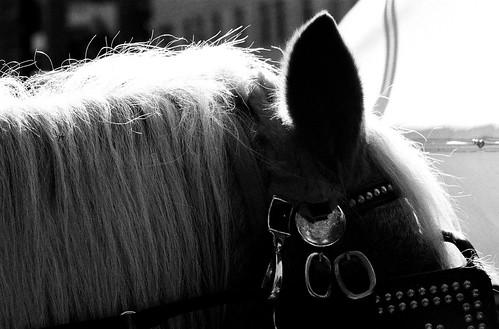 Horse, Central Park. (Ilford Delta 400. Nikon F100. Noritsu Koki.)