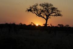 sign (fabrizia maiorano) Tags: africa tree birds landscape tramonto uccelli botswana albero paesaggio flickraward