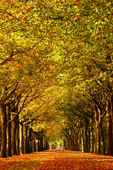 Amsterdam is about to FALL (kees straver (will be back online soon friends)) Tags: road park bridge blue autumn trees light red sky holland color macro reflection tree green fall nature mushroom water netherlands colors grass leaves lines station amsterdam yellow architecture clouds rural forest canon landscape countryside vanishingpoint leaf bomen woods path country herfst perspective foliage lane bos zuidas zuid mywinners anawesomeshot keesstraver