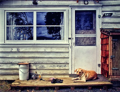 Still Life With Woof (SirSatellite) Tags: light shadow dog contrast cabin explored
