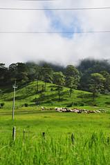 Landscape (1) (Nikole Bouchard) Tags: landscape mexico waterfall jungle chiapas aquaazul