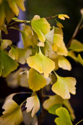 Projekt 52,Woche 40: goldener Herbst