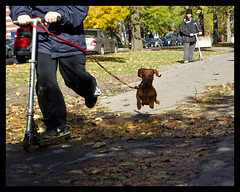 jump (Barb  rat) Tags: chien 5bestdogs parclafontaine tekel