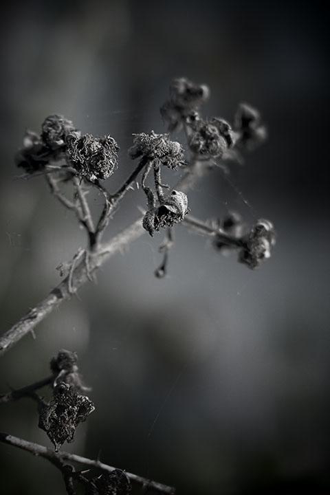 Photography - Flower Skeleton by Nicholas M Vivian