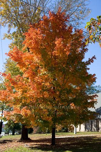 AutumnTree_Nov052009_0003web