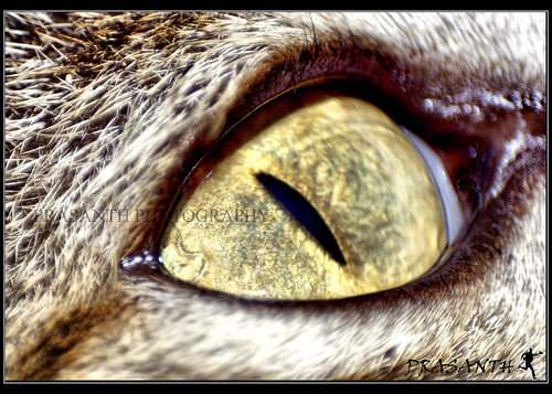cat eyes close up. What you see is a close up of