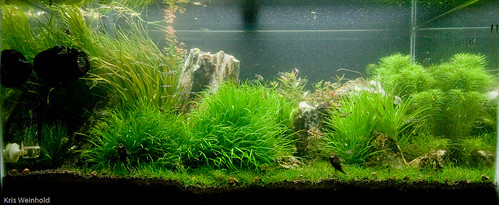50G Aquascape - 12-9-2009