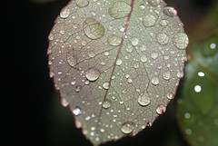 green leaf drops