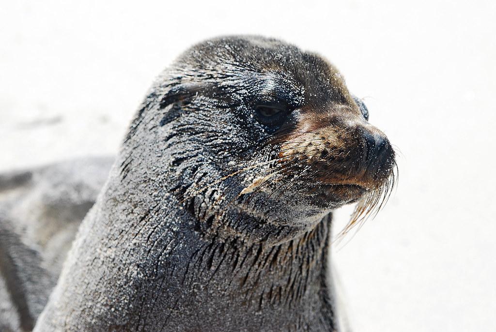Galapagos Islands-182