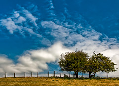 Out and About (Gordon Mould) Tags: uk trees england sky cloud clouds fence lens landscape geotagged nikon leicestershire kitlens kit hdr loughborough lightroom 18105 d90 tonemapped 18105mm superaplus aplusphoto nikond90