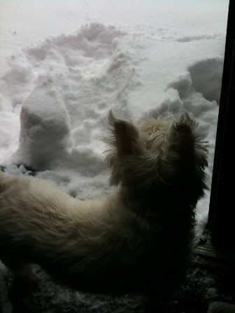 blog pabs snow
