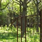 Ruine im Wald thumbnail