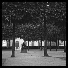 Ultra moderne solitude - Paris (abdelkrim13) Tags: bw paris 120 6x6 film solitude alone louvre nb moderne arbres hp5 medium et parc ilford yashica banc argentique seul lonelyness pellicule modernit isol iso ilfotec format blanc noir ultra 29 400 solitude noiretblanc|france moyen format carr lc